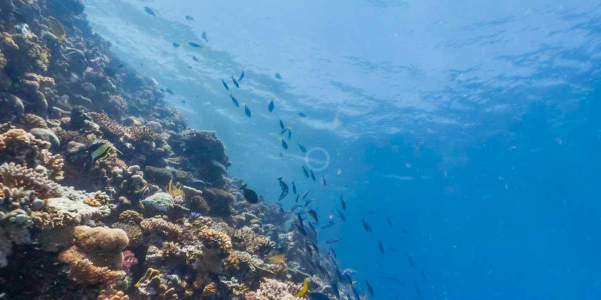 WWF setzt auf Virtual Reality für Unterschriftenaktion