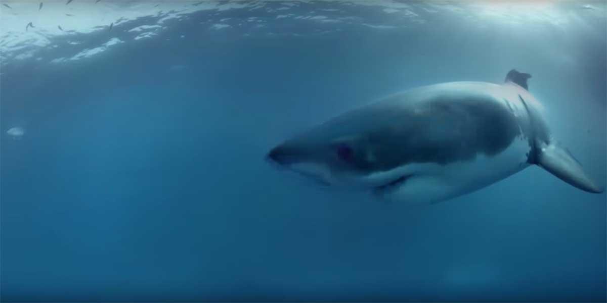 Hai frisst Mensch 1200 Kilometer vom Meer entfernt