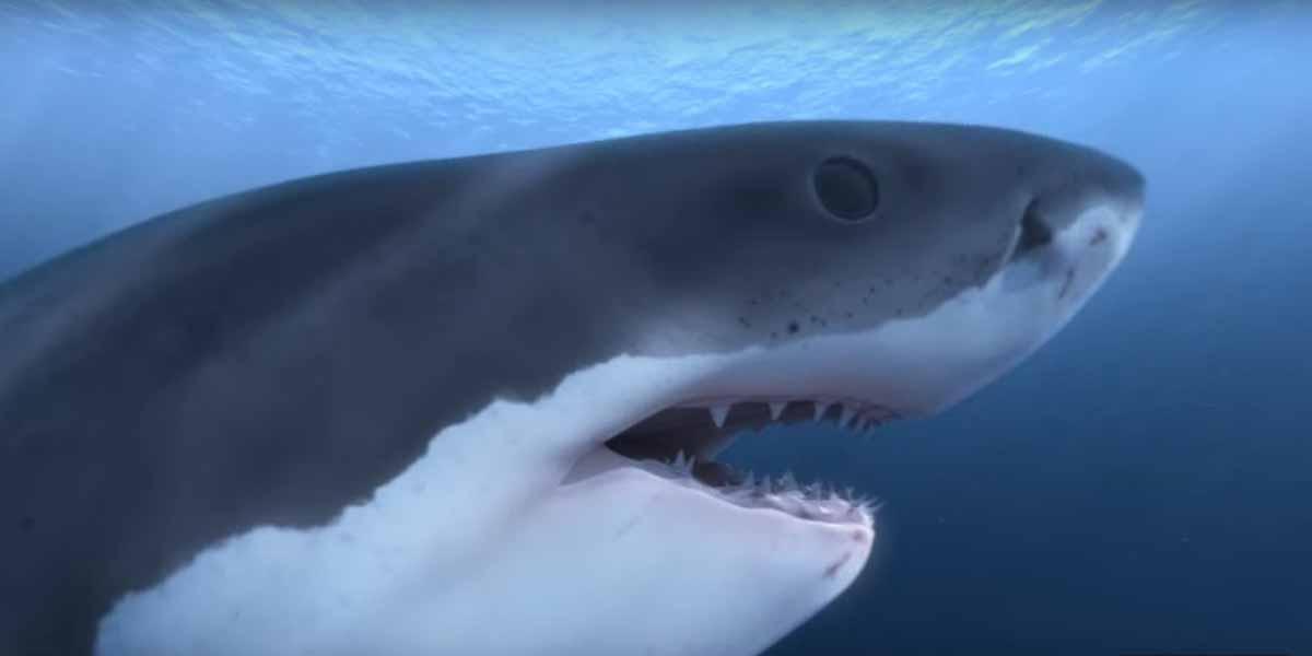 PETA zeichnet Virtual-Reality-Film aus