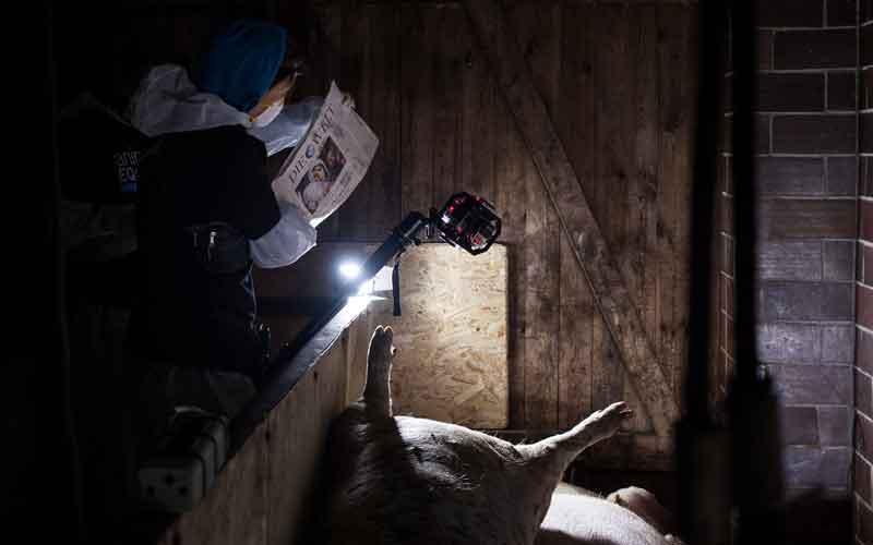 Animal Equality filmt mit 360-Kameras eine Reportage aus dem Schlachthaus.