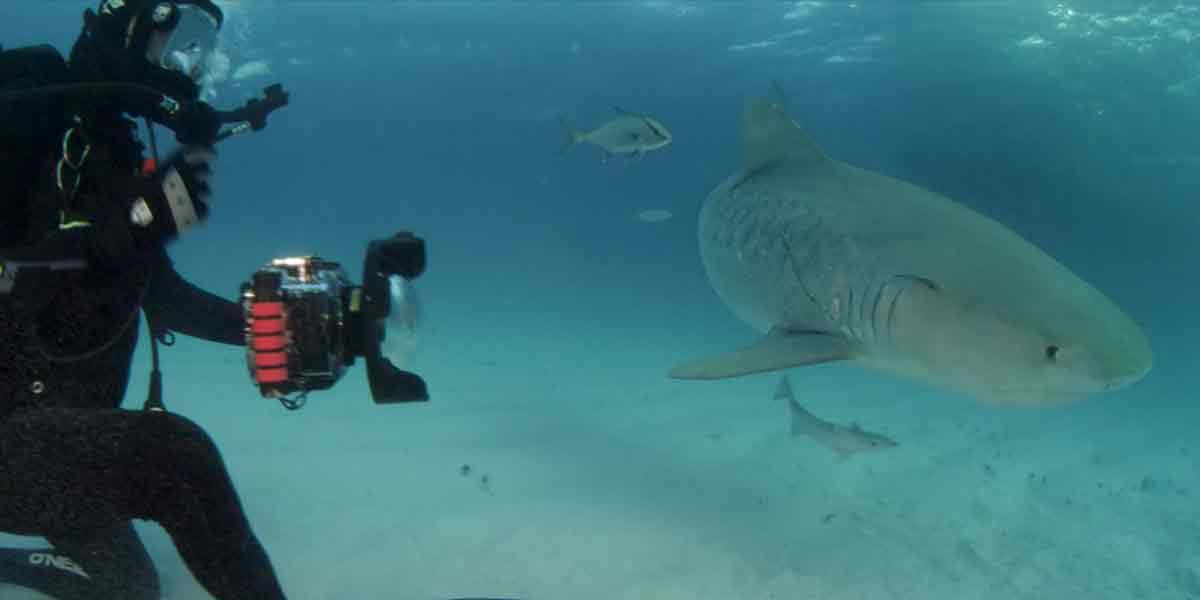Die Discovery Channel Serie Shark Week gibt es ab dieser Woche auch in 360°.