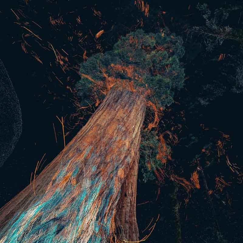 Auf Basis von Originaldaten wird der Baum künstlerisch visuell aufwendig inszeniert. Bild: MLF