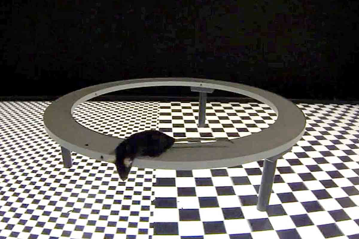 Wissenschaftler eines Bioforschungszentrums wollen herausfinden, wie Labortiere auf virtuelle Umgebungen reagieren.