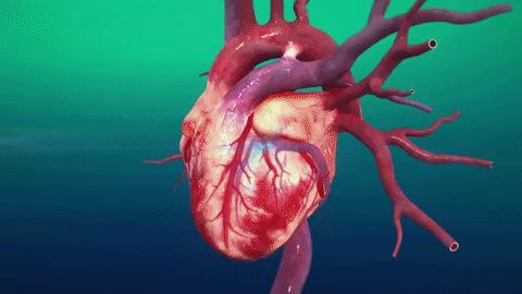   sharecare you heart animation still tmp