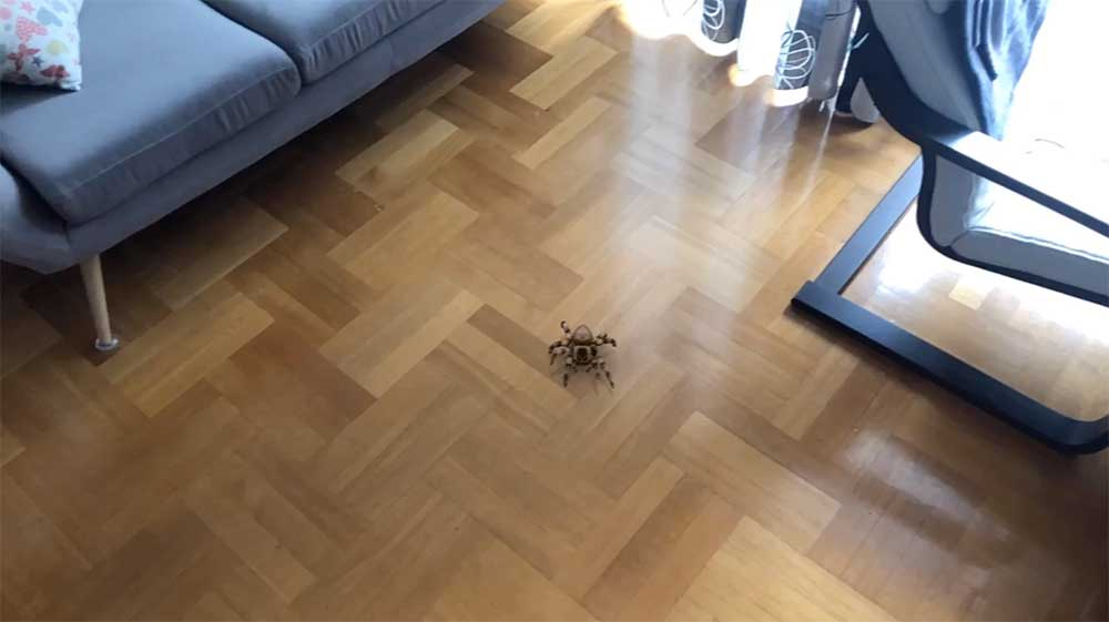 AR_Spiders