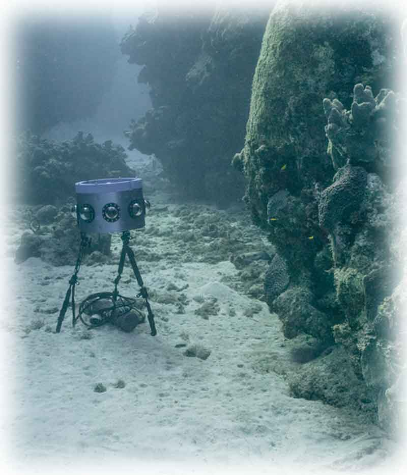 Die Fische sind sich nicht sicher sein, ob sie gerade gefilmt oder von einem Alien attackiert werden. Bild: Marine Imaging Technologies