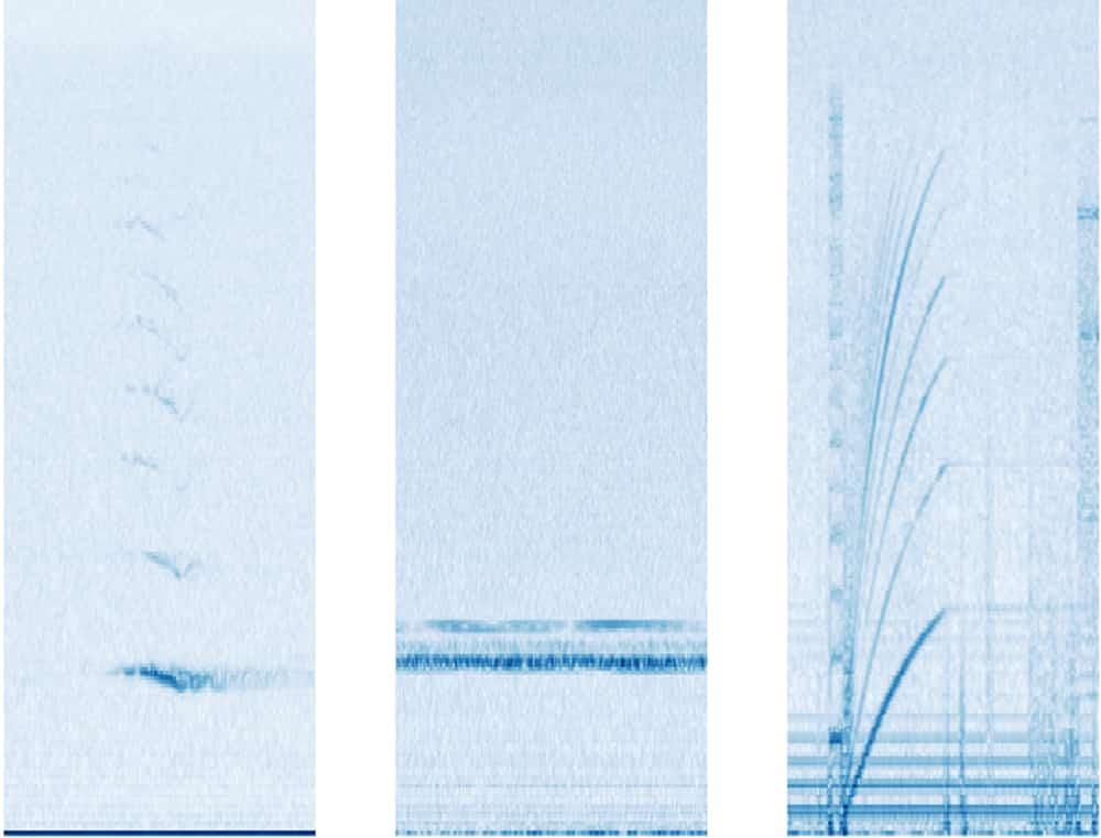 Diese Spektrogramme bekommt die KI zu sehen. Links die Darstellung eines Walrufes. In der Mitte die Störgeräusche eines Bootes und rechts das Geräusch der Festplatte des Hydrophons.