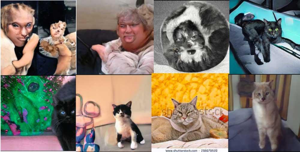 """KI generiert Katzenfotos: Webseite """"Diese Katze existiert nicht"""" ist ziemlich unheimlich"""