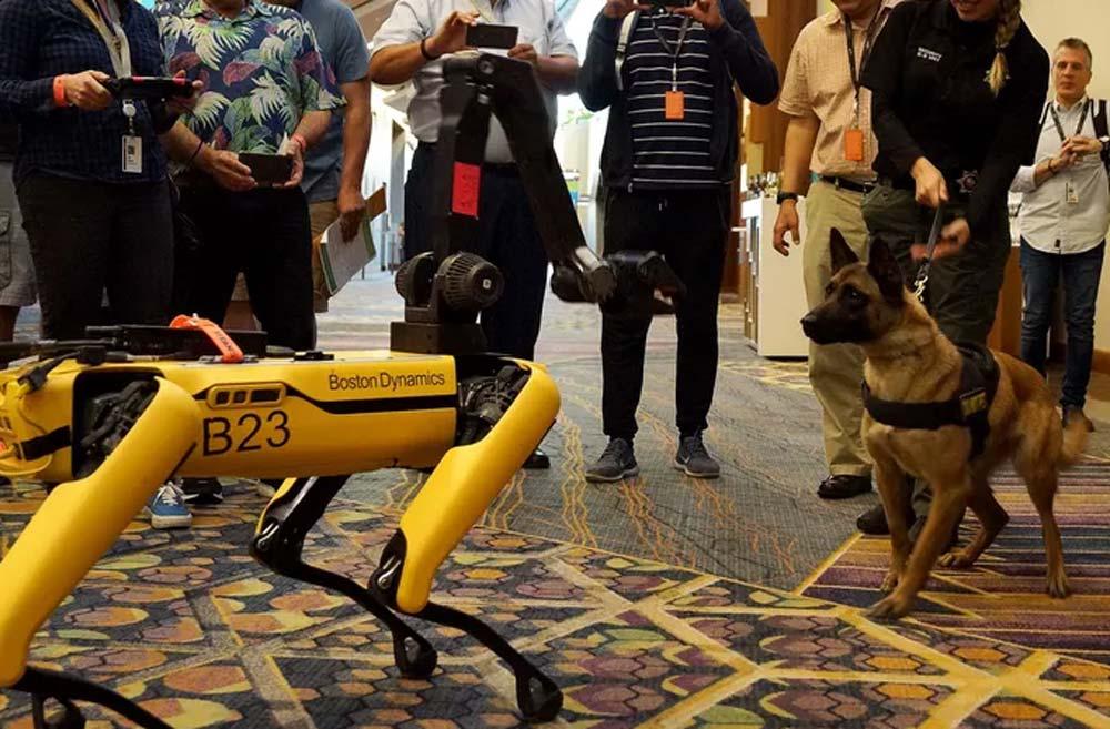 Maschine trifft Tier: Hunderoboter SpotMini spielt mit Polizeihund