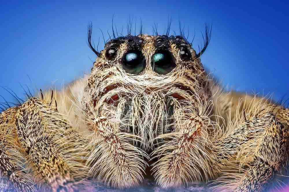Von Spinnenaugen inspiriert: Harvard-Forscher entwickeln neuartigen Tiefensensor