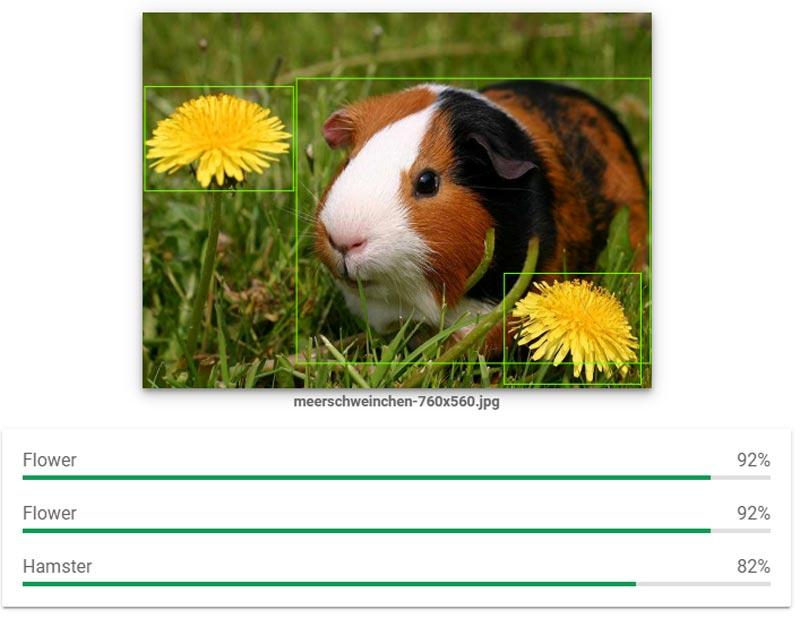 | hamster meerschweinchen google