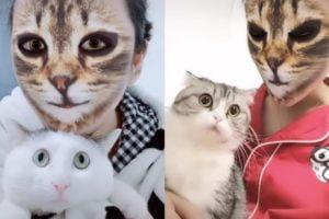 Der jüngste AR-Hit ist ein Katzengesichtsfilter. Videos zeigen die Reaktionen der Haustiere.