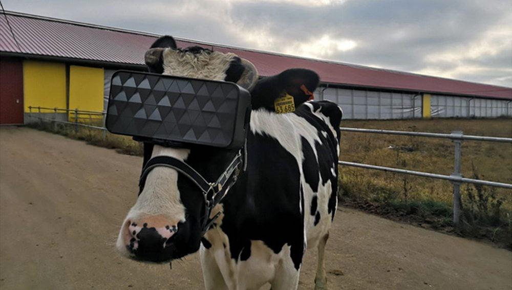 russische Kuh mit VR-Brille