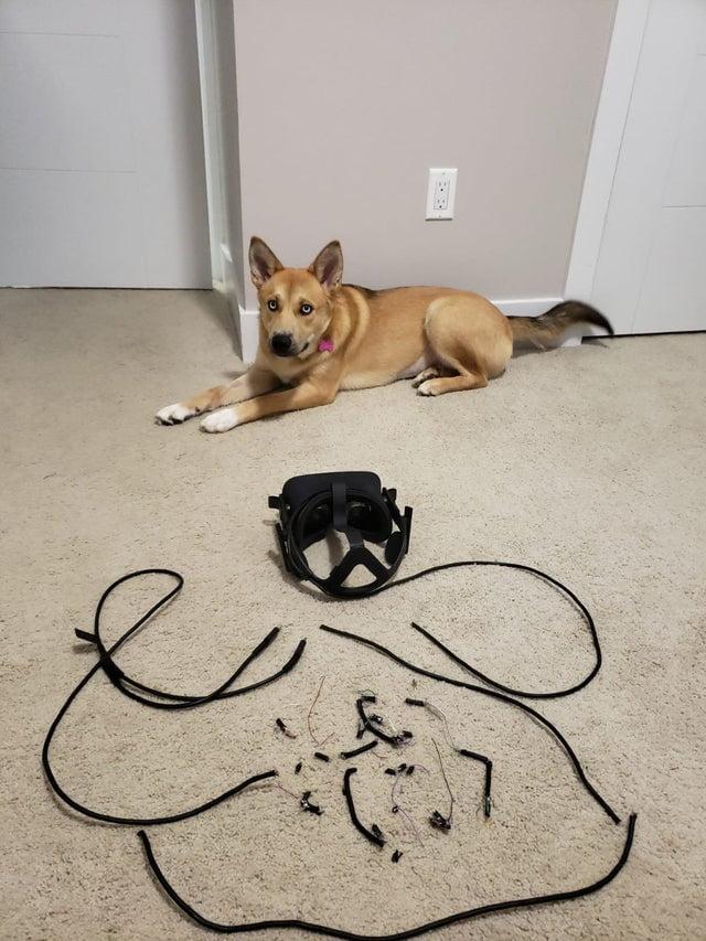   Hunde moegen VR nicht