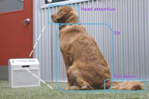 KI kurios: Autonomes Hundetraining soll Bello Manieren beibringen