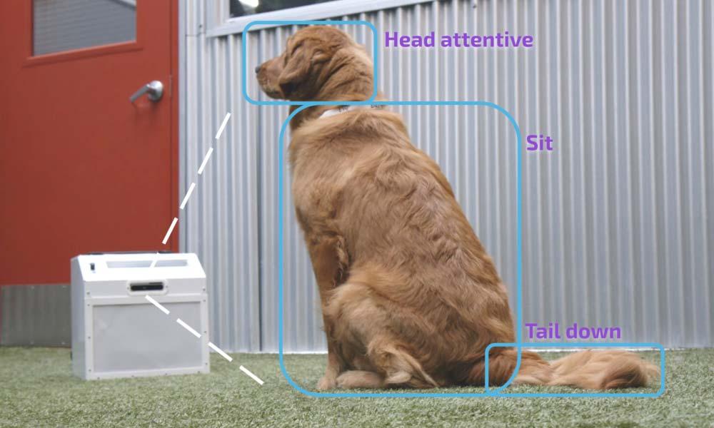 Bildanalyse-KIs werden immer genauer. Beispielsweise kann eine entsprechend trainierte KI das Hundeverhalten beurteilen anhand der Körperhaltung. Ist es erwünscht, gibt es ein Leckerli - alles automatisch. Bild: Companion Labs