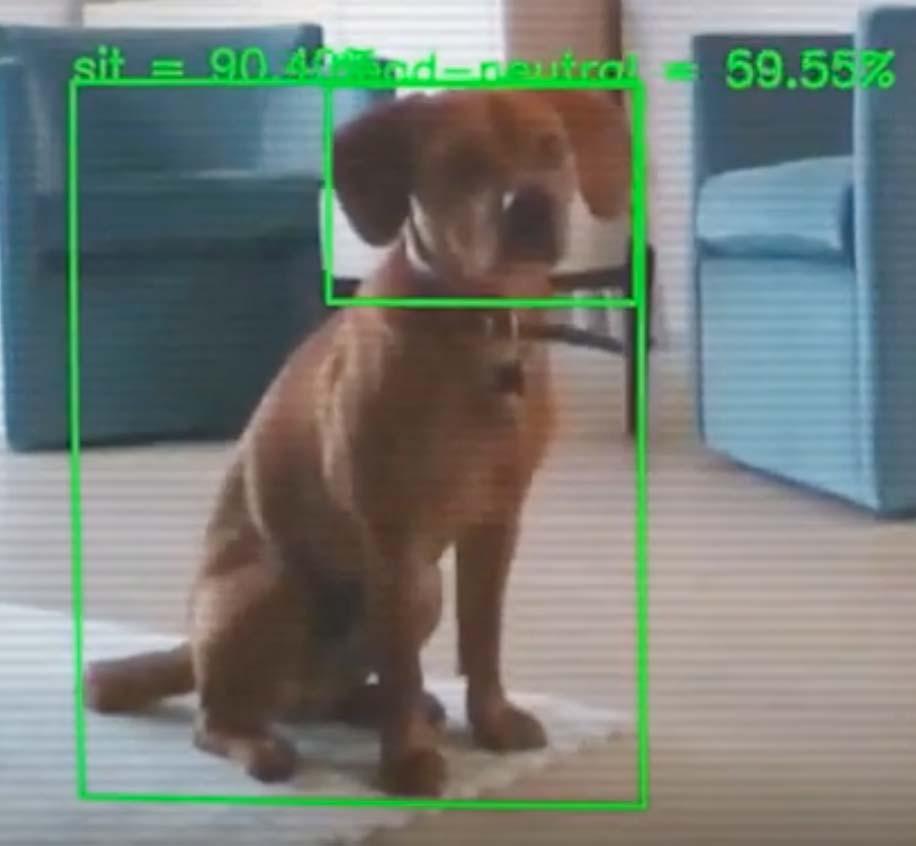 Moderne KI-Bildanalyse macht's möglich: Maschinen lernen, Hundeverhalten zu interpretieren. Bild: Companion