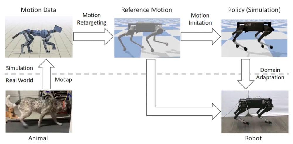 Reale Hundebewegungen wurden auf ein digitales Modell übertragen und wanderten nach dem KI-Training von dort auf den Hunderoboter, der so realistische Hundebewegungen lernte. Bild: Google AI