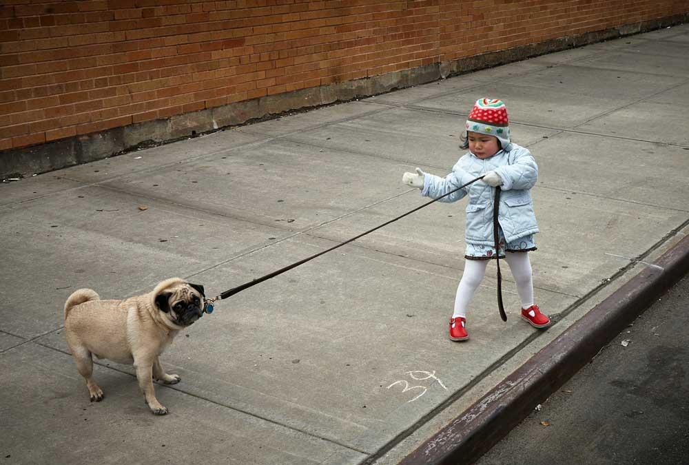 | Specification Gaming Hund mit Kind unsplash