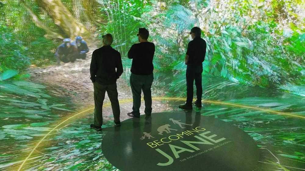 Drei Männer stehen in einem 3D-Kino der Becoming Jane Ausstellung, das Schimpansen in der Wildnis zeigt