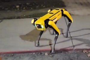 Der Roboterhund Spot auf einem Gehweg in einer kanadischen Kleinstadt.