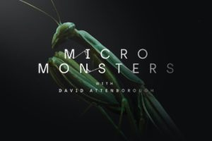 Micro_Monsters_Gottesanbeterin