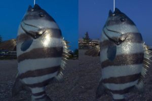 Vergleich der VR-App Real VR Fishing auf der Oculus Quest und der Oculus Quest 2.
