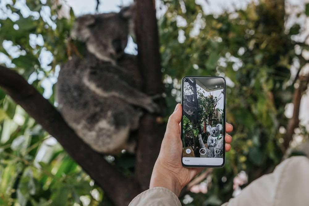 Google_AR_Suche_Koala