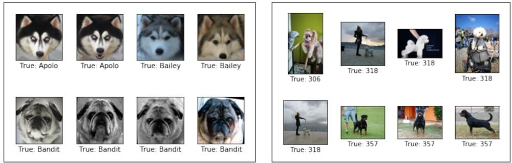 Fotos von Hunden aus einer Bildanalyse