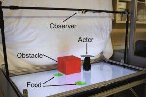 Versuchsaufbau Roboter und Beobachter