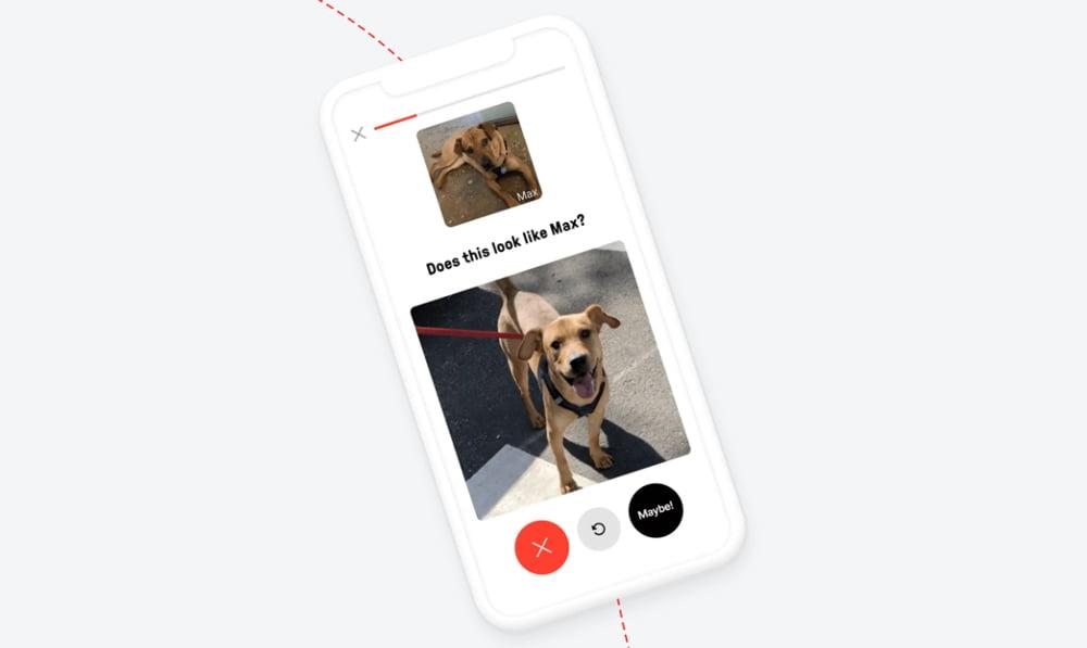 Doggo-Vision: KI-Schnauzenerkennung bringt entlaufene Hunde zurück