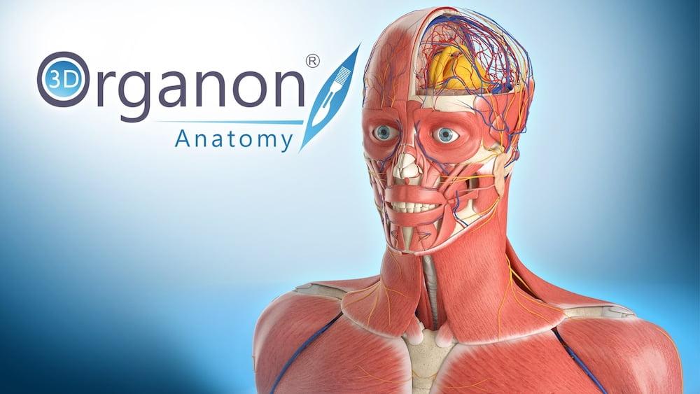 3D_Organon_Anatomy