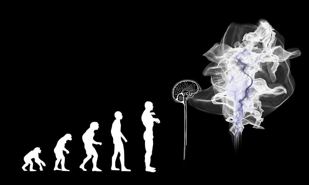 Googles neue KI verbessert sich im Darwin-Stil