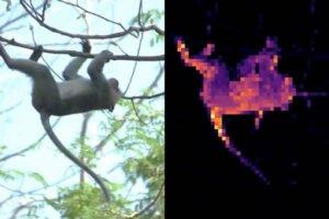 Ein Affe und ein Wärmebildähnliche Darstellung der Aufmerksamkeit der Bildanalyse-KI