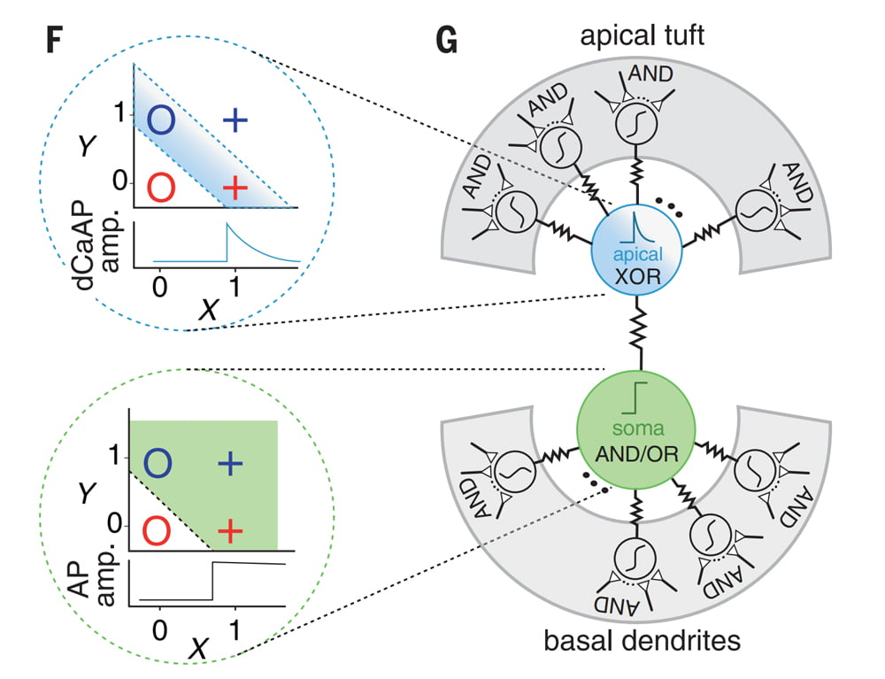 Darstellung der XOR und AND/OR Funktionen im Neuron