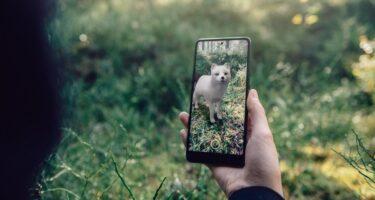 Google AR: Projiziert euch vom Aussterben bedrohte Tiere in den Raum