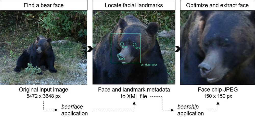 BearID Pipeline für die Gesichtserkennung